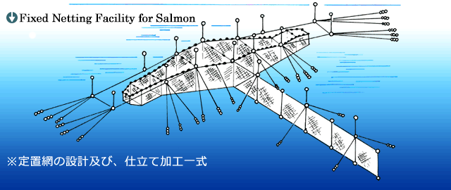 Fixed Netting Facility for Salmon